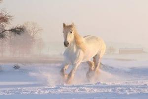 Salute | L'esercito dei cavalieri bianchi 1