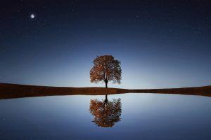 blog ipnosi 15